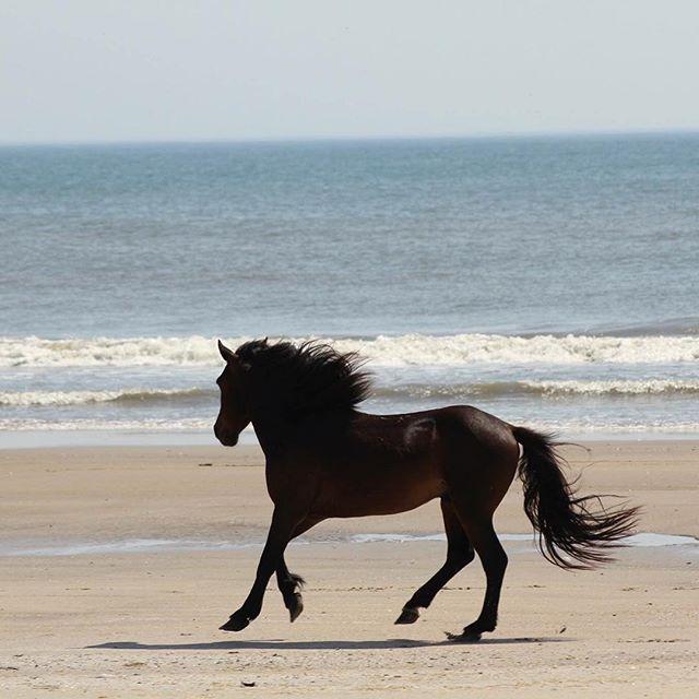 Wild Horse Tours Virginia