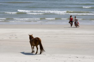 Family on beach with wild horse in distance