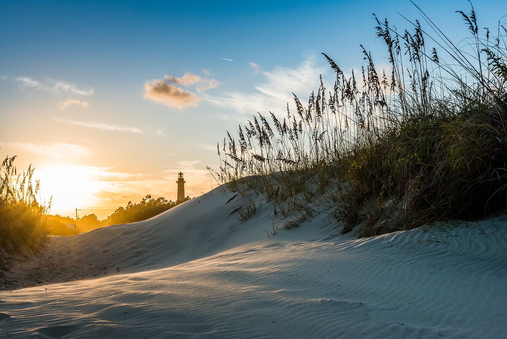 Recycled Christmas trees help form area sand dunes