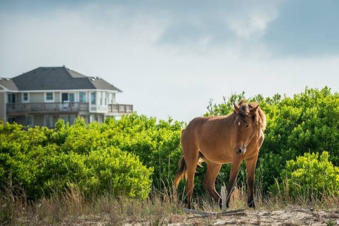 Outer Banks vacation home rentals